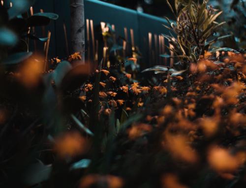 SMOG FLOWERS